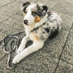 Lumos at 4 months