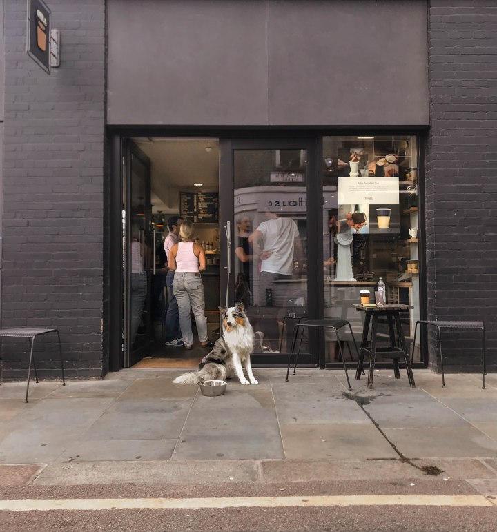 Australian Shepherd in Shoreditch